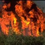 Лесные пожары: виноваты поджигатели