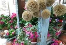 Выставка «Бабушкины окна» началась в Ботаническом саду ТвГУ