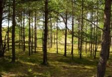 На территории Лаишевского лесничества будут проведены мероприятия по лесоустройству
